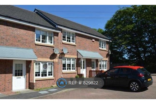 Thumbnail Terraced house to rent in Wilkie Drive, Motherwell