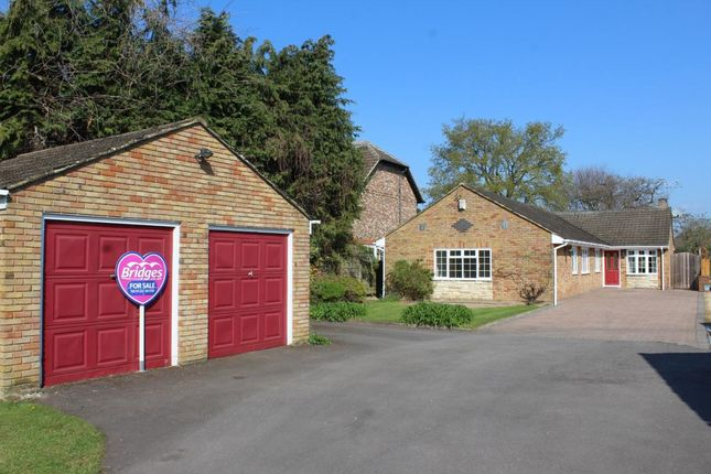 Thumbnail Detached bungalow for sale in Coleford Paddocks, Mytchett