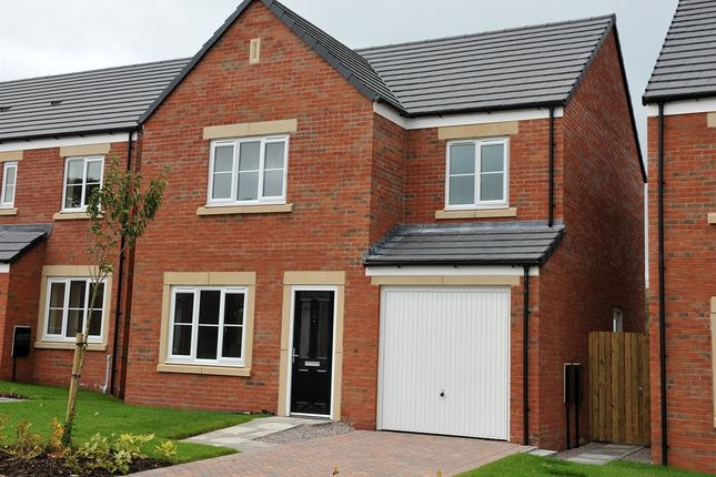 """Thumbnail Detached house for sale in """"The Roseberry """" at Holtwood Drive, Woodlands, Ivybridge"""