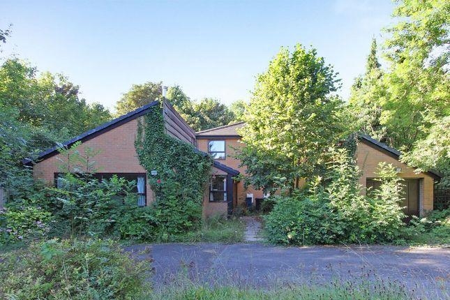 Thumbnail Property to rent in St. James Road, Purley