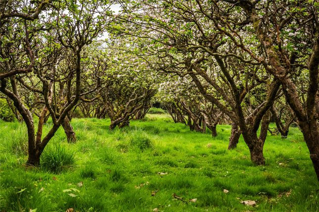 Apple Orchard of Givons Grove, Leatherhead, Surrey KT22