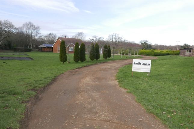 Thumbnail Detached bungalow for sale in Newmans Lane, West Moors, Ferndown