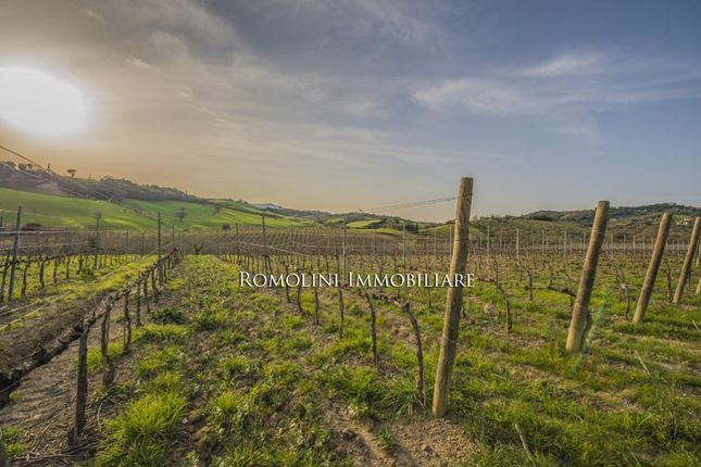 Farm for sale in Maremma, Tuscany, Italy
