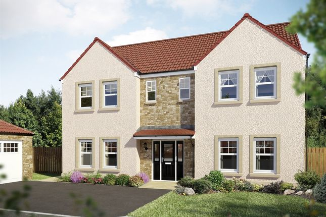 "Thumbnail Detached house for sale in ""The Houston "" at Hamilton Road, Larbert"