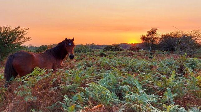 Dartmoor Pony of The Glade, Crapstone, Yelverton PL20