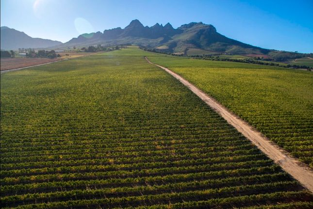 Thumbnail Farm for sale in Eikendal, Stellenbosch, Cape Winelands, Western Cape, South Africa