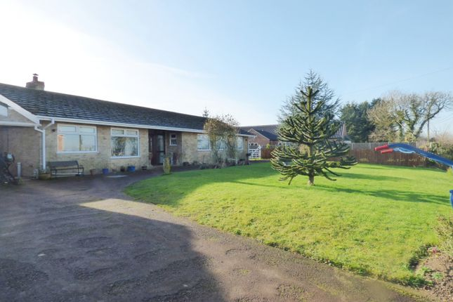 Thumbnail Detached bungalow for sale in High Green, Great Moulton