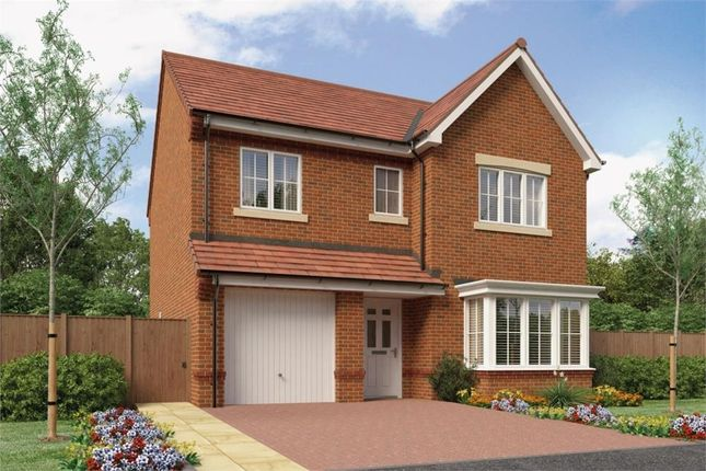 "Thumbnail Detached house for sale in ""The Glenmuir"" at Buttercup Gardens, Blyth"