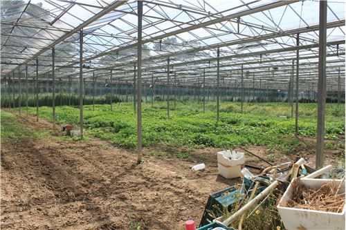 Thumbnail Farm for sale in Ashes Lane, Hadlow, Tonbridge TN11, Tonbridge,