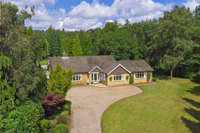 Thumbnail Detached bungalow for sale in Clumps Road, Lower Bourne, Farnham, Surrey