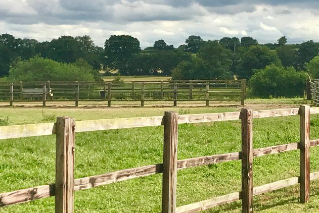 Thumbnail Equestrian property for sale in Lower Road, Glemsford, Sudbury