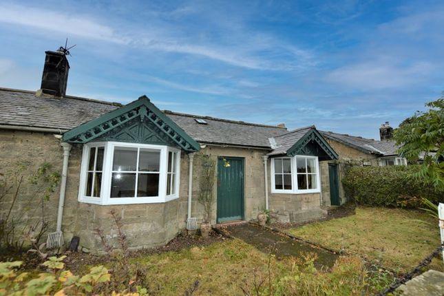 3 bed semi-detached bungalow to rent in West Hedgeley, Powburn, Alnwick NE66