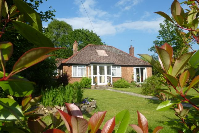 Thumbnail Bungalow to rent in Church Road, Liphook