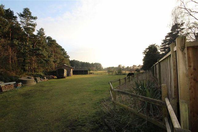 Thumbnail Detached bungalow for sale in Hurn Road, St Leonards, Dorset