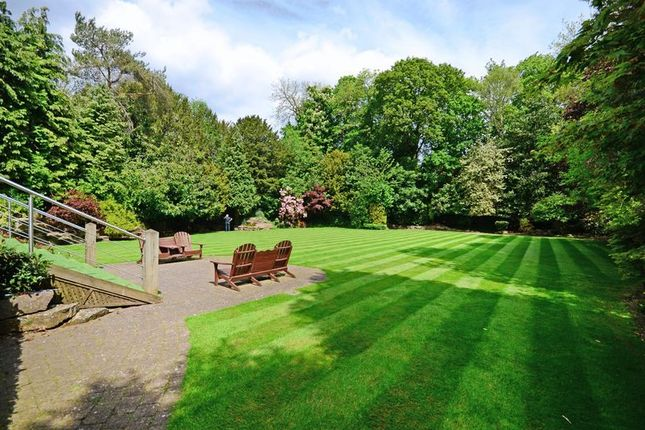 Woodland Setting of Rivendell, Derriman Glen, Ecclesall, Sheffield S11