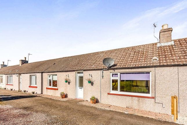 Thumbnail Bungalow for sale in Craigo, Montrose
