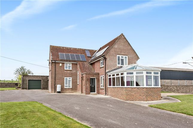 Thumbnail Detached house for sale in Cheselbourne, Dorchester