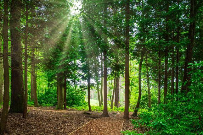 Woodland Walks of Brompton Gardens, London Road, Ascot, Berkshire SL5