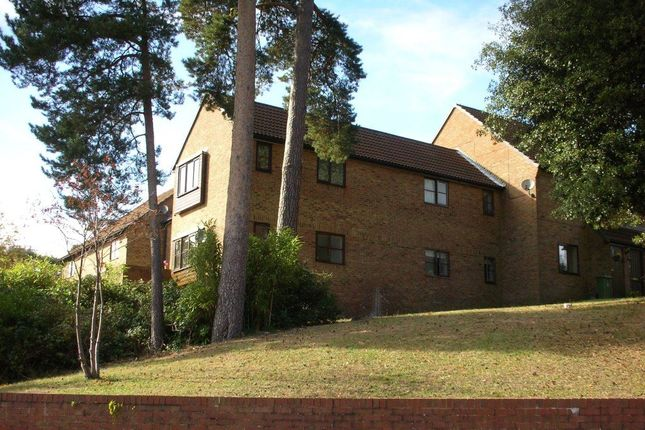 Thumbnail Studio to rent in Bluebell Rise, Lightwater
