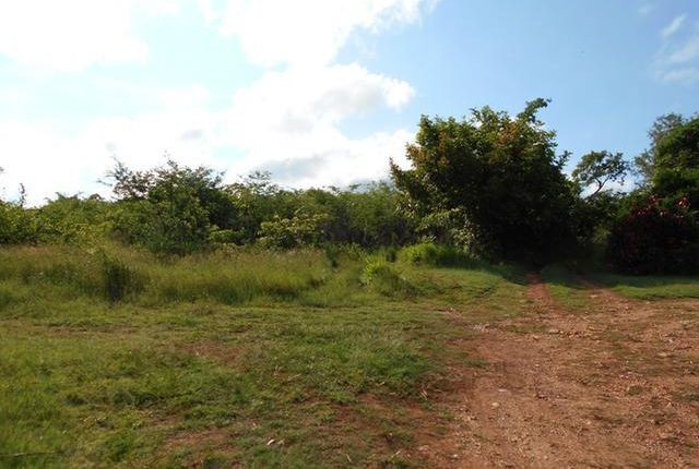 Land for sale in Falmouth, Trelawny, Jamaica