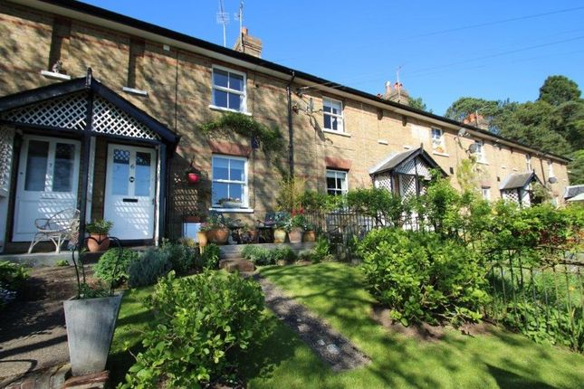 Thumbnail Terraced house for sale in Dewhurst Cottages, Wadhurst Road, Wadhurst