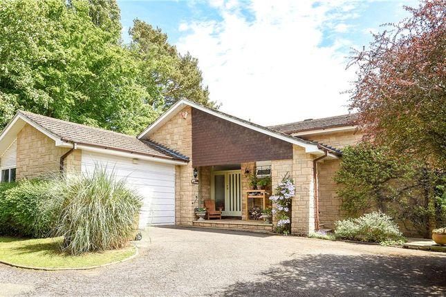Thumbnail Detached bungalow for sale in Aldersey Road, Guildford, Surrey