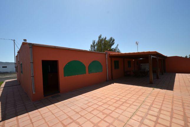 Main Terrace of La Mata, Tiquital 8, Spain