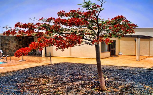 C Quiet Front Beach Villa Fuerteventura