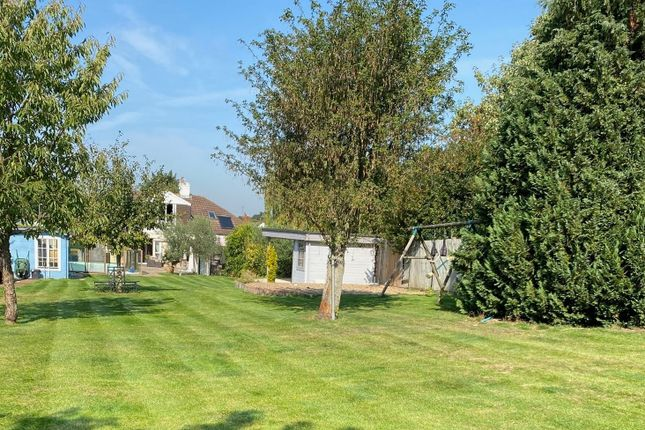 Thumbnail Semi-detached bungalow for sale in Cranleigh Close, Orpington