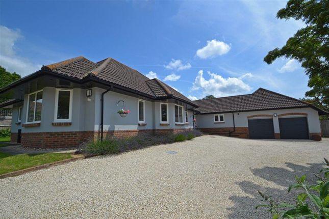 Thumbnail Detached bungalow to rent in Silverwood Copse, West Chiltington, Pulborough