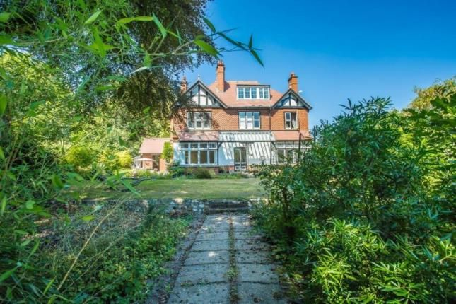 Thumbnail Detached house for sale in The Avenue, Whyteleafe, Surrey