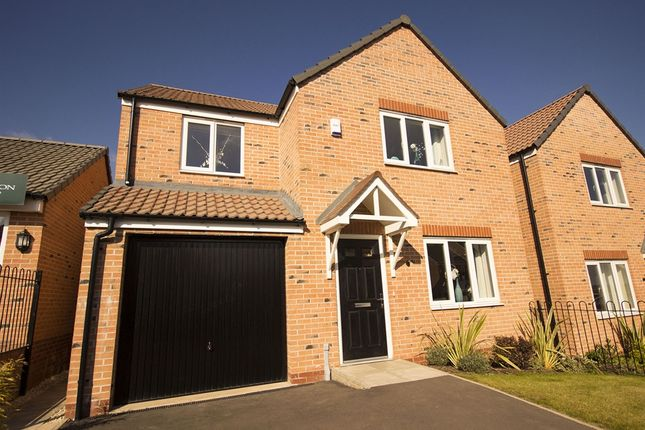 """Thumbnail Detached house for sale in """"The Roseberry"""" at Hilltop, Oakwood, Derby"""