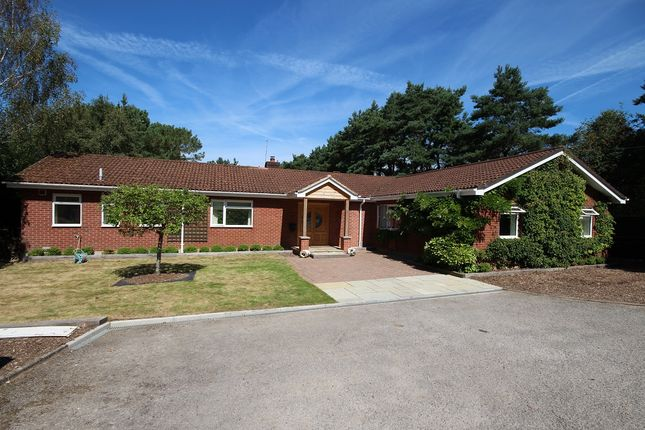 Thumbnail Detached bungalow to rent in Barnsfield Road, St. Leonards, Ringwood