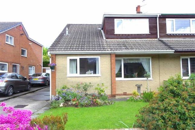 Thumbnail Semi-detached house to rent in Cedar Close, Grimsargh, Preston