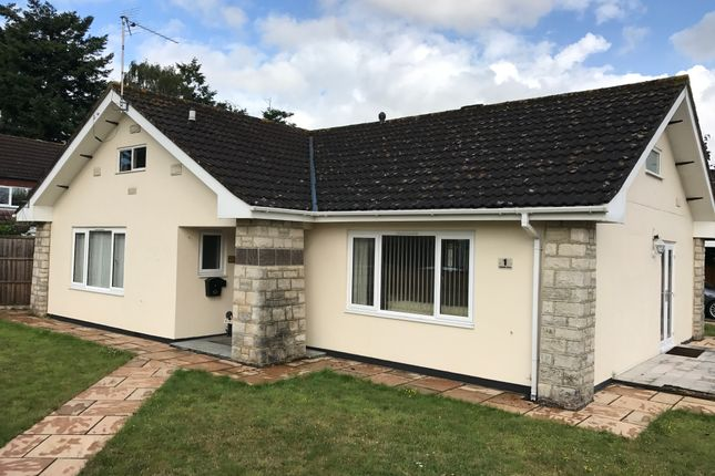 Thumbnail Detached bungalow to rent in Uplands Close, West Moors, Ferndown