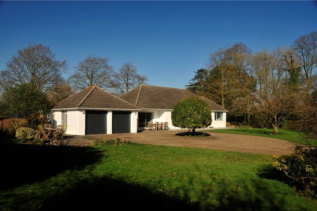 Thumbnail Detached bungalow for sale in Musbury Lane, Marnhull, Sturminster Newton, Dorset