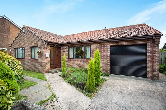 Thumbnail Bungalow to rent in Hill Drive, Ackworth, Pontefract