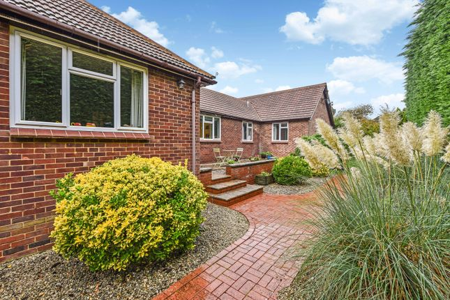 Thumbnail Detached bungalow for sale in Anstey Road, Alton, Hampshire