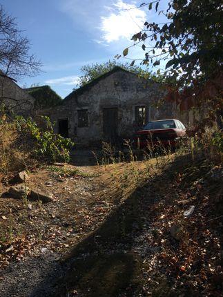 Ruin 6 Front Garden.