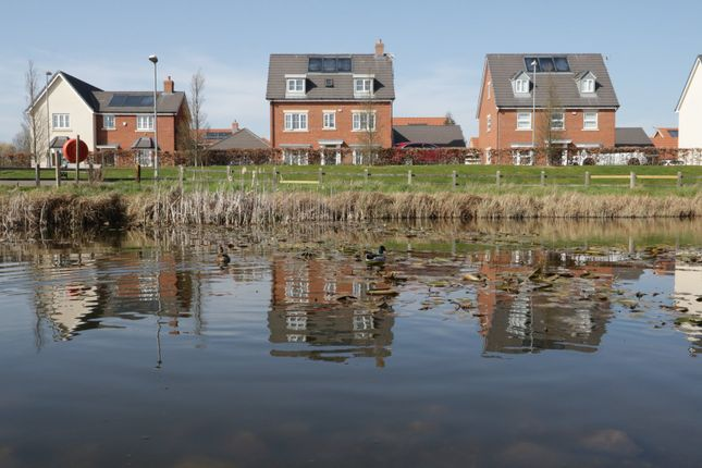 Thumbnail Detached house for sale in Shetland Crescent, Rochford, Essex