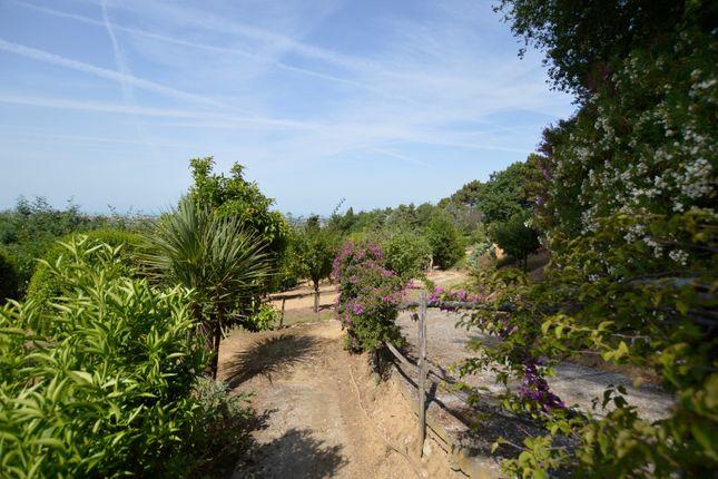 Garden of Villetta Clara, Massarosa, Lucca, Tuscany, Italy