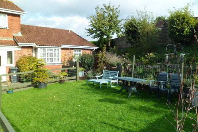 Thumbnail Semi-detached bungalow to rent in Roman Way, Honiton