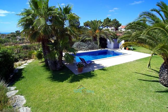 Mature Palms, Luscious Lawn  & Pool