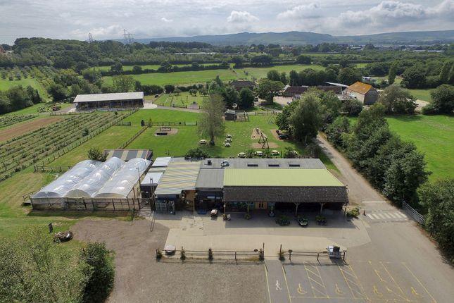 Thumbnail Farm for sale in Hailsham Road, Stone Cross