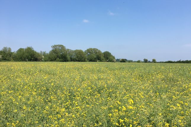 Thumbnail Land for sale in Salisbury Road, East Hanney, Oxfordshire