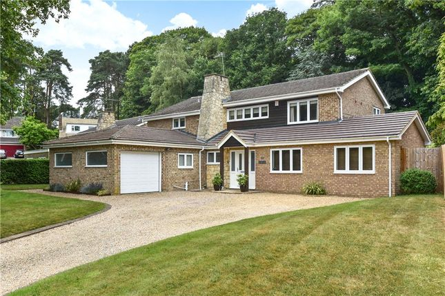 Thumbnail Detached house for sale in Paddock Close, Camberley, Surrey