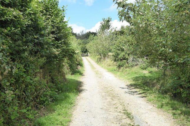 Access Track of Mary Tavy, Tavistock PL19