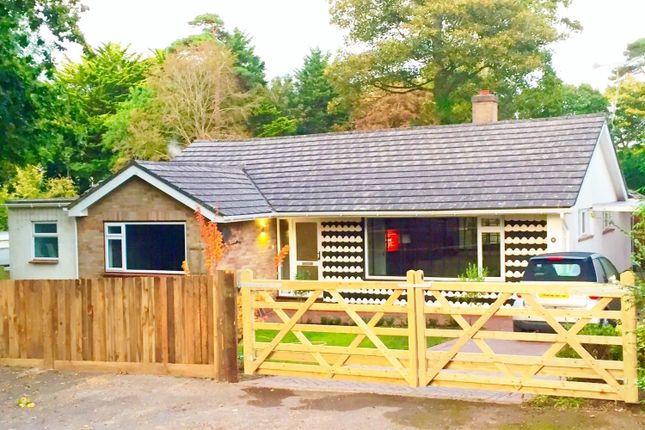 Thumbnail Detached bungalow to rent in Curzon Way, Highcliffe, Christchurch