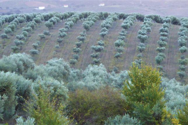 Thumbnail Farm for sale in Portugal, Norte, A. Da Fé., Alfândega Da Fé (Parish), Alfândega Da Fé, Bragança, Norte, Portugal
