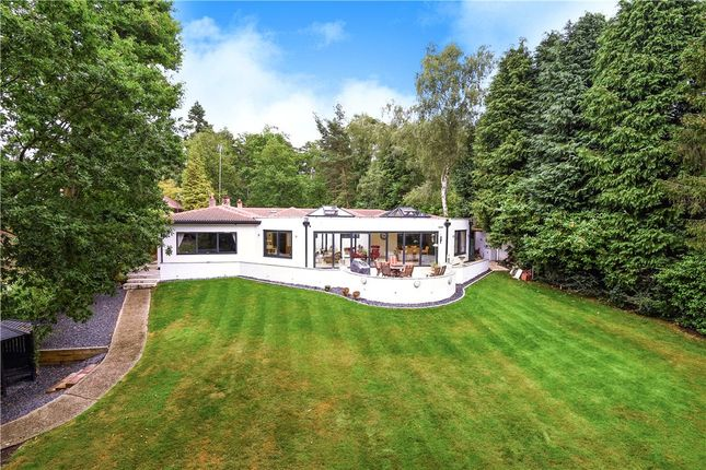 Thumbnail Detached bungalow for sale in Hollybush Ride, Finchampstead, Wokingham
